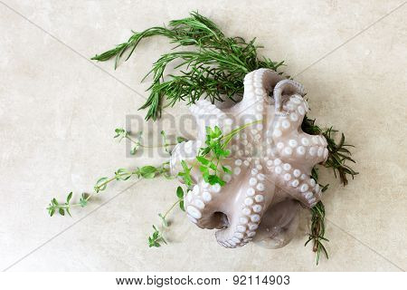 Fresh Octopus With Aromatic Herbs