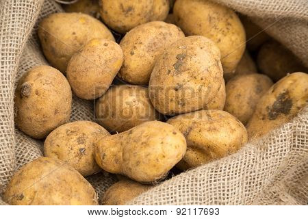 Potatoes in burlap fabric sack