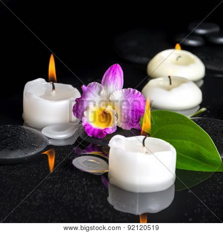 Spa Setting Of Purple Orchid Dendrobium, Green Leaf With Dew And Candles On Black Zen Stones