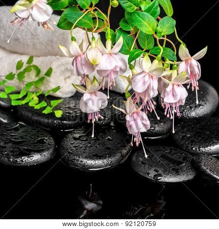 Spa Setting Of Branch Pink Fuchsia Flower, Towels, Leaf Fern  And Zen Basalt Stones With Dew, `frank