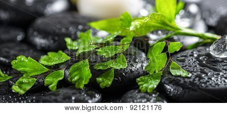 Beautiful Spa Concept Of Green Twig Fern, Bamboo, Ice And Candles On Zen Basalt Stones With Drops, P
