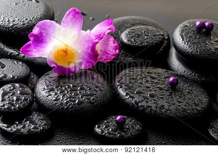 Beautiful Purple Orchid Dendrobium With Drops On Black Background, Closeup