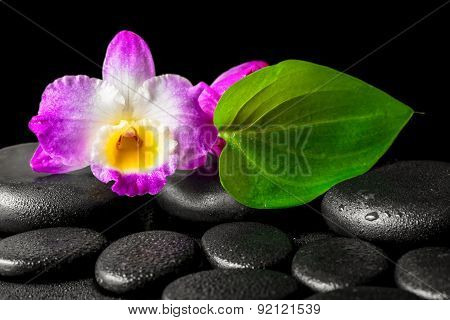 Spa Background Of Closeup Orchid Flower Dendrobium And Green Leaf On Black Zen Stones Background Wit