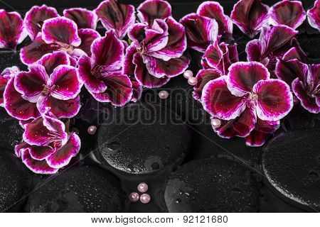 Beautiful Spa Still Life Of Geranium Flower, Beads And Black Zen Stones With Drops In Reflection Wat