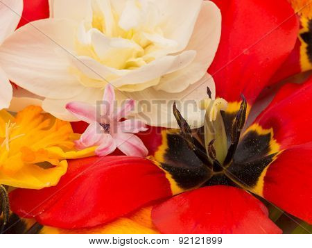 Red Tulips And Spring Bouquet