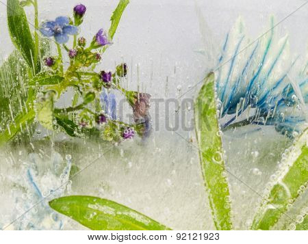 Blue Flowers And Leaves In Ice