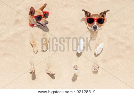 Couple Of Dogs Buried In Sand