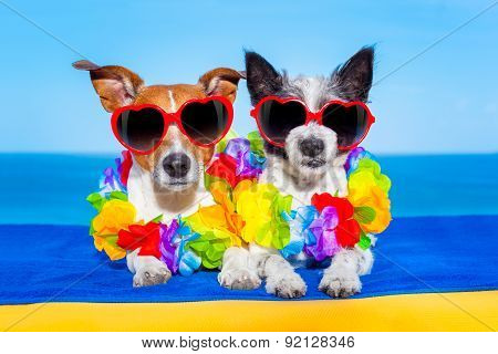 Summer  Honeymoon  Dogs In Love