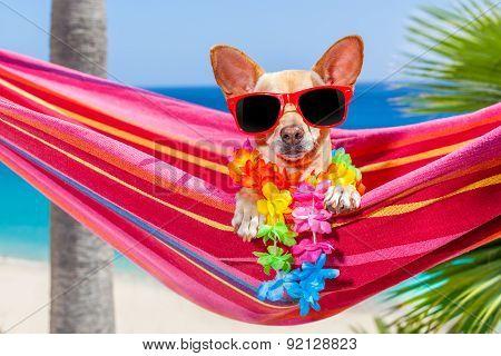 Dog Summer Hammock