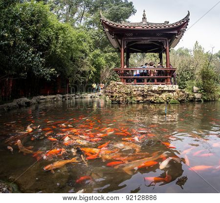 Rainbow Fish in the Chinese pond