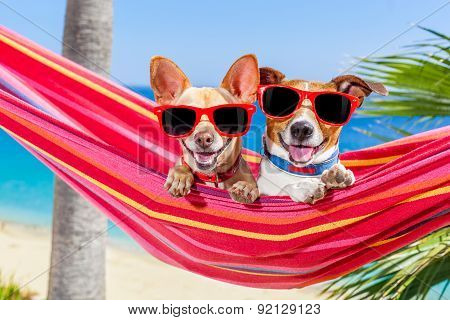 Dogs Summer Hammock