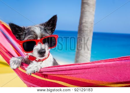Dog Summer Hammock