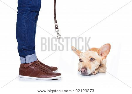 Dog And Owner For A Walk