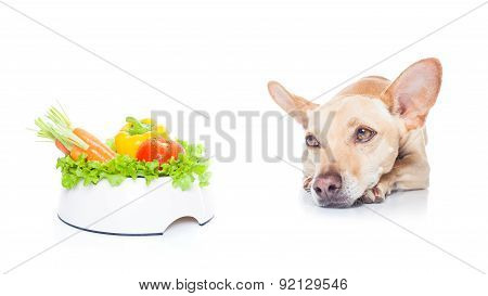 Vegan Dog