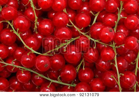 Redcurrant. Natural Background