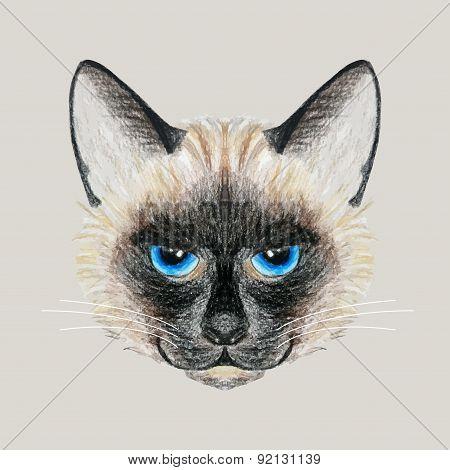 Hand Drawn Siamese Cat