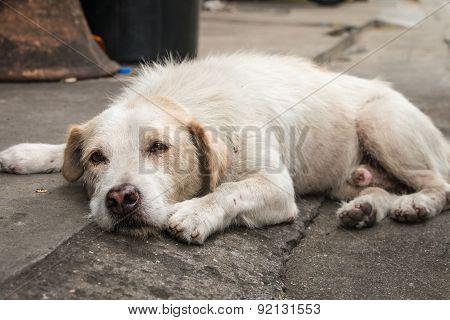 Homeless dog sleeping
