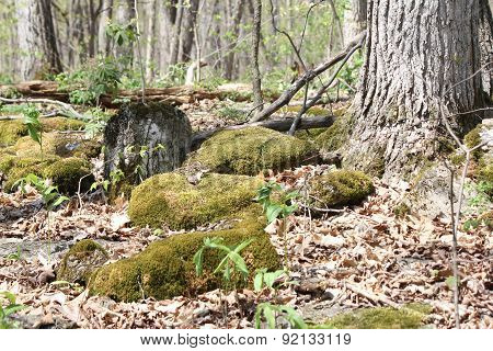 Moss growing on Rocks
