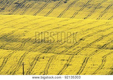 Abstract Textured Turnip Field