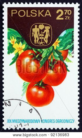 Postage Stamp Poland 1974 Tomatoes