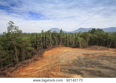 Deforestation environmental damage