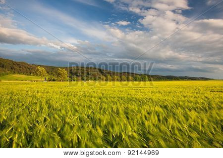 On The Edge Of A Cornfield