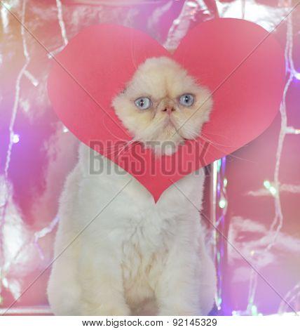 Annoyed Cat