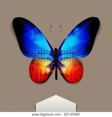 butterfly with blue-orange wings