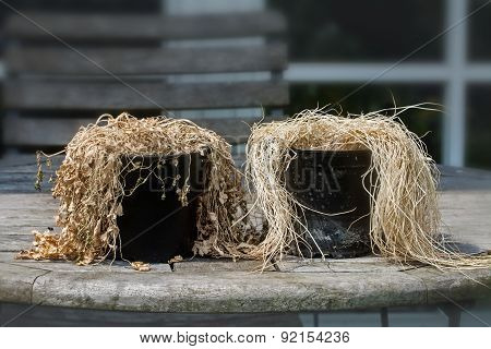 Plant Pots With Withered Herbs Looking Like Old People Without Care