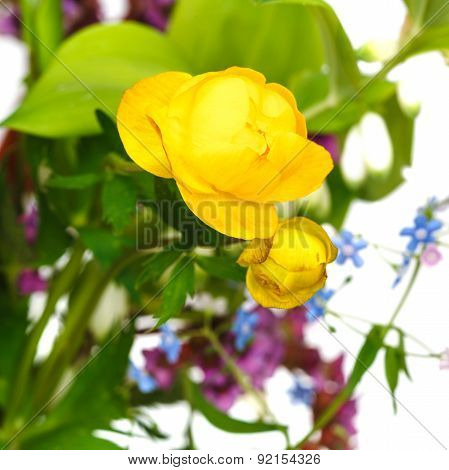 Fresh Yellow Trollius Flowers In Posy