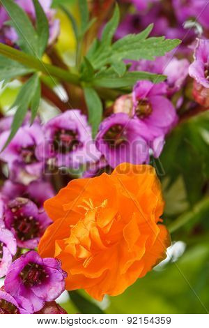 Natural Trollius And Bergenia Flowers Close Up