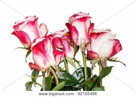Side View Of Bouquet Of Pink Roses Isolated