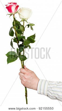 Hand Giving Bouquet Of Two White And Pink Rose