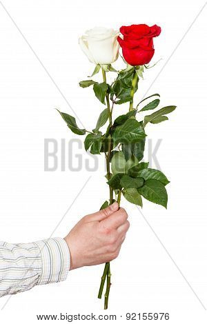 Hand Holds Two White And Red Roses Isolated
