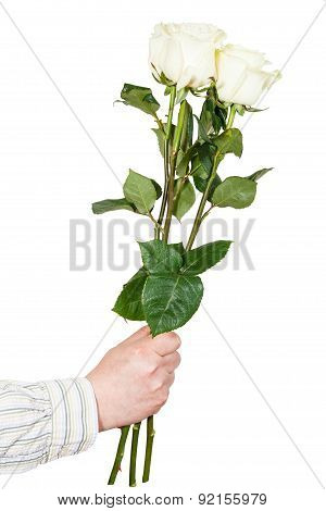Hand Giving Three White Roses Isolated