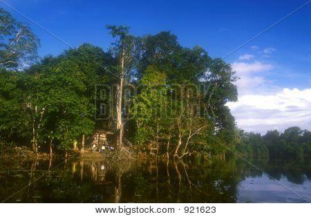 Jungle Hut In Borneo