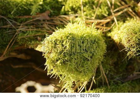Fresh bed of moss in spring