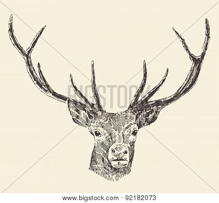 Deer Head Vintage Illustration, Hand Drawn, Vector