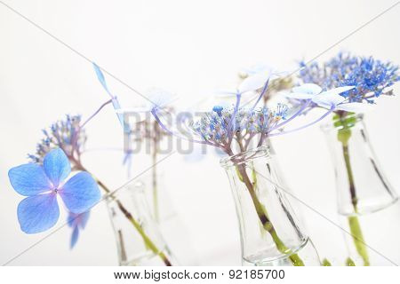 Fragile Blue Blossoms In Transparent Grass Bottles