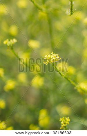 Light On Yellow Wildflowers