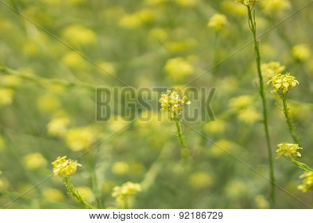 Stem Of Green And Yellow Wildflowers