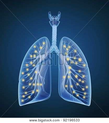 Human lungs and bronchi and oxygen in x-ray view