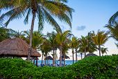picture of playa del carmen  - Palm trees at dusk along the beach at Playa Del Carmen in Mexico - JPG