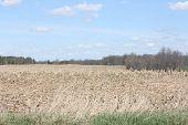 image of corn stalk  - Harvested corn field - JPG