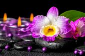 pic of calla lily  - spa background of purple orchid dendrobium green leaf Calla lily purple candles and beads on zen stones with drops closeup