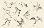 stock photo of swallow  - Swallows flying bird set vintage illustration - JPG