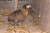 picture of hen house  - Portrait of hen in a house hens in the garden - JPG