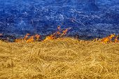 foto of ashes  - Burning yellow grass and blue smoke and ashes like the Ukrainian flag - JPG