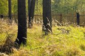 stock photo of decomposition  - The primeval forest with grass on ground - JPG