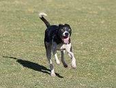 picture of dog park  - A very happy - JPG